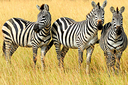 south africa travel